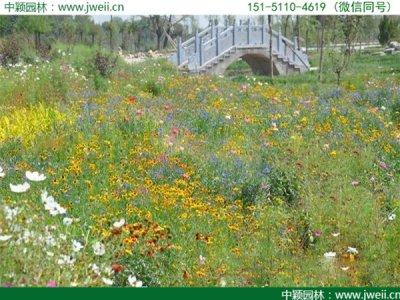 陕西可以种植野花组合吗?