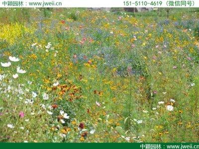 东北野花组合常用品种有那些?