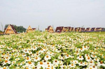 花卉种子 壮丽的花海景观是如何建造的