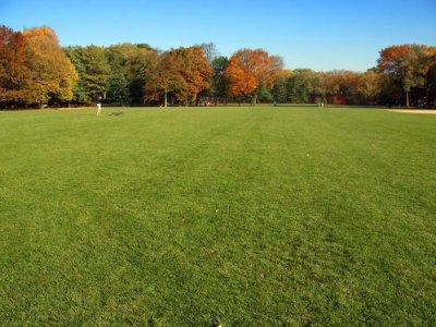 优质草坪种子 如何管理出苗后的草坪?