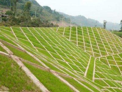 护坡草坪种子 常见的五种护坡草的品种