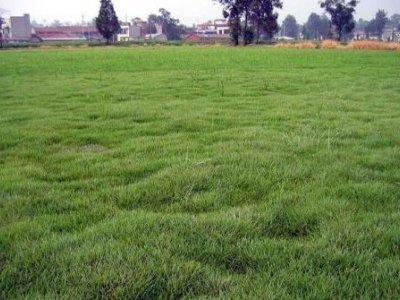 草坪常见的病害的发生规律及防治方法