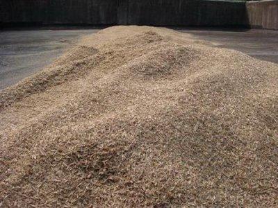 鸭茅草种子