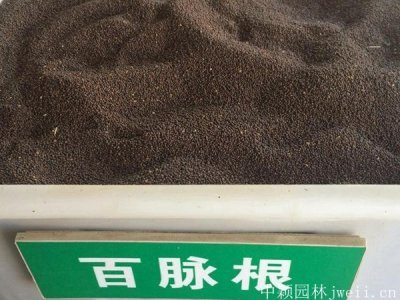 百脉根种子